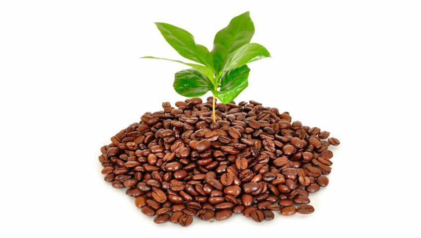 Beneficios de los posos de café en las plantas de interior